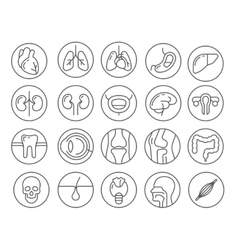 Human organs line icon set vector