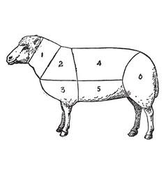 Mutton vintage vector