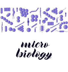purple bacterias micro biology hand lettering vector image