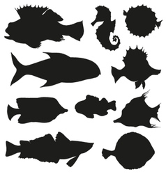 Set of fishes isolated on a white backgrounds vector image