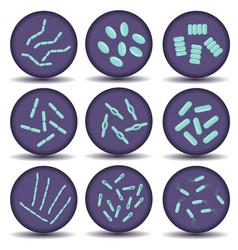 Arrangements of green bacillus bacteria vector