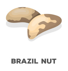 brazil nutsdifferent kinds of nuts single icon in vector image