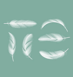 Feathers collection flying furry goose vector
