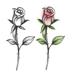 ink sketched and colorful roses vector image