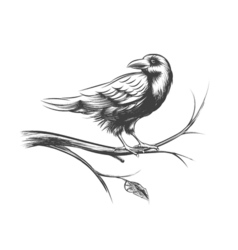 Raven or black crow sketches and silhouettes set vector image vector image