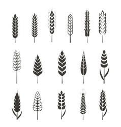 Set of simple wheat ears icons and design elements vector image vector image