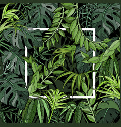 tropical background with palm leaves white frame vector image