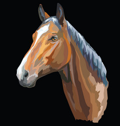 Colored horse portrait-1 vector