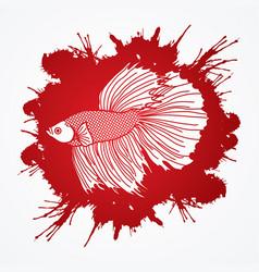 Siamese fighting fish graphic vector
