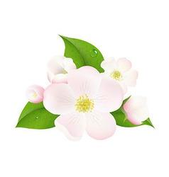Apple Tree Flowers vector image vector image