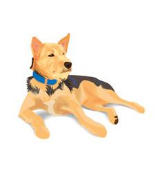 hybrid brown dog wearing blue collar lying on vector image