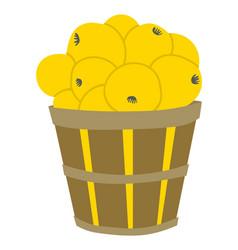 Apples in basket fruit in pottle orchard vector