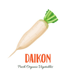 daikon vegetable vector image