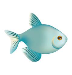 Colorful realistic fish aquatic animal icon vector