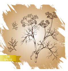 Background sketch herbs - dill vector