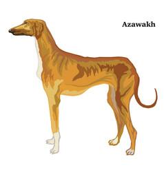 colored decorative standing portrait azawakh vector image
