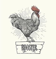 Rooster hand drawn Symbol of 2017 vector