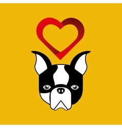 Cute dog pet with french bulldog heart background vector