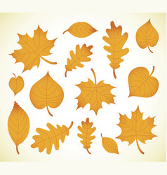 autumn leaves simple cartoon flat style vector image