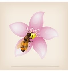 Bee flies on a flower vector image