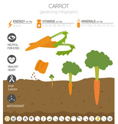 Carrot beneficial features graphic template vector