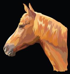 colored horse portrait-9 vector image