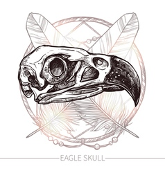 Eagle Skull Hand Drawn vector image