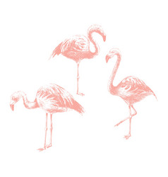 Hand drawn flamingoes vector
