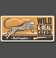 safari hunting cheetah animal vector image