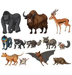 Different kind of wild animals on white vector