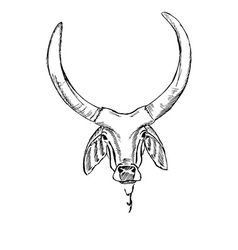 Head of the Indian sacred cow zebu vector