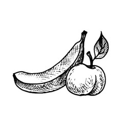 Ink drawing banana and peach vector