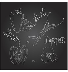 sweet and hot peppers set of hand drawn vector image vector image