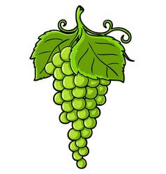 cartoon green grapes vector image
