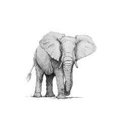 Elephant pencil vector