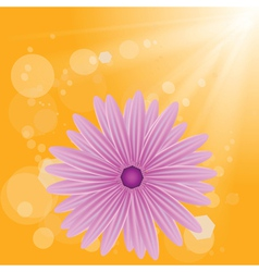 Flower on sun background vector