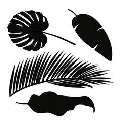 set of palm leaves silhouettes isolated on white vector image