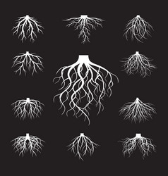 Set of white roots vector