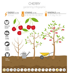 Cherry beneficial features graphic template vector