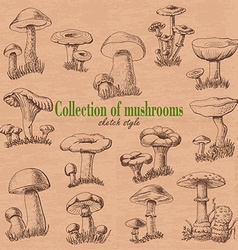 Collection of mushrooms in sketch style vector