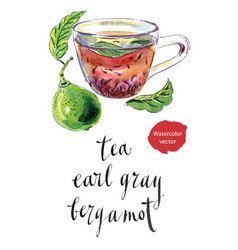 Cup earl grey tea with bergamot kaffir lime vector