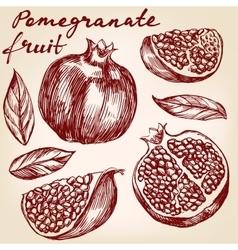 fruit pomegranate set hand drawn vector image