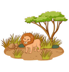 lion in savannah forest on white background vector image
