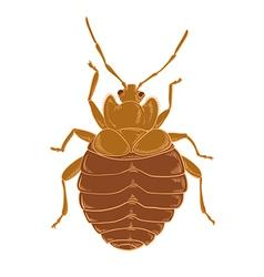 Orange bedbug vector image