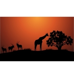 Silhouette of antelope and giraffe vector