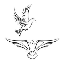 stylized dove vector image