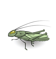 Green grasshopper vector