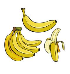 set of yellow bananas vector image vector image
