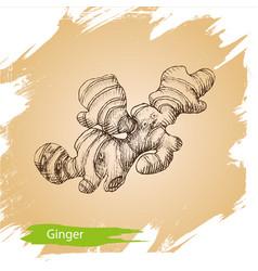 background sketch ginger of vector image