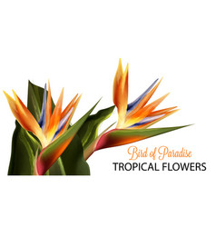 bird paradise flower watercolor isolated vector image